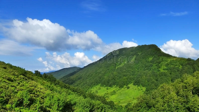 Cáucaso de surpresa imagem de stock