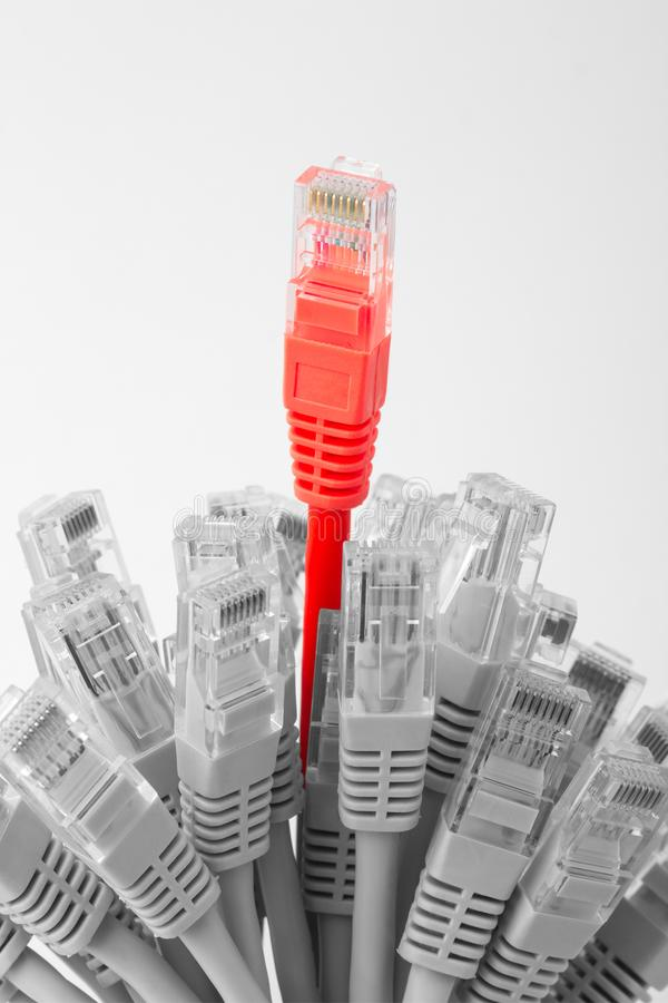 Câbles Ethernet image stock