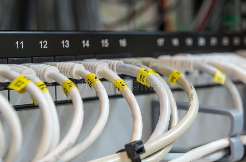 Câbles LAN de données d'Ethernet d'ordinateur dans une rangée photographie stock