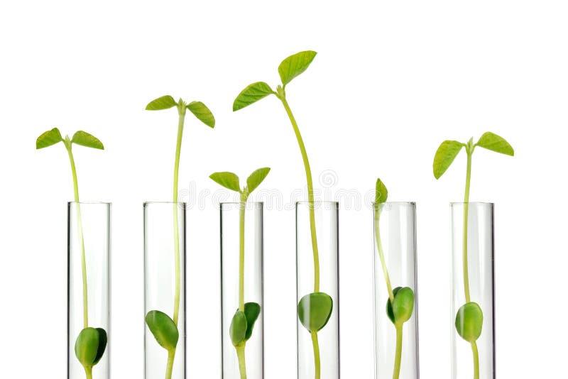 Câmaras de ar de teste com plantas pequenas imagem de stock