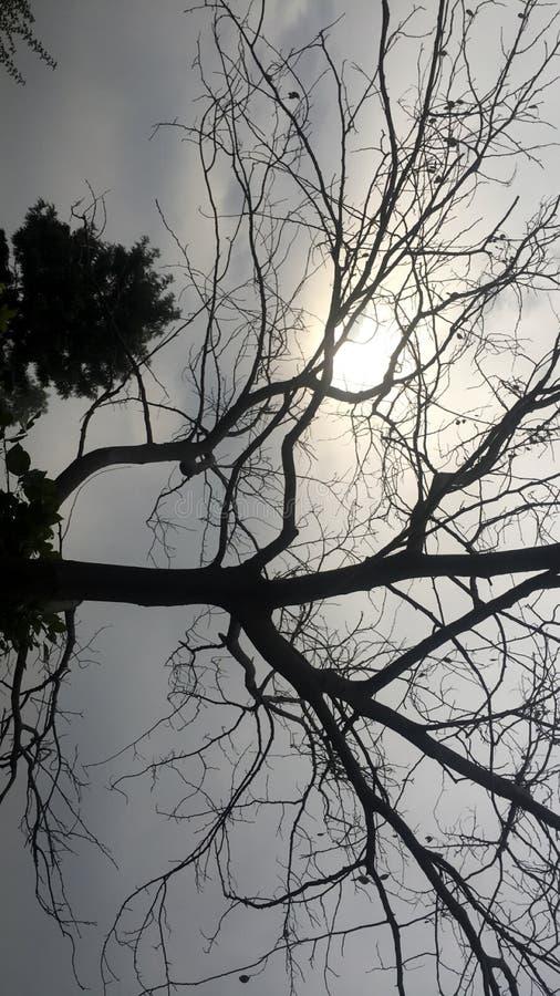 A câmera clica a beleza dos nature's fotos de stock royalty free