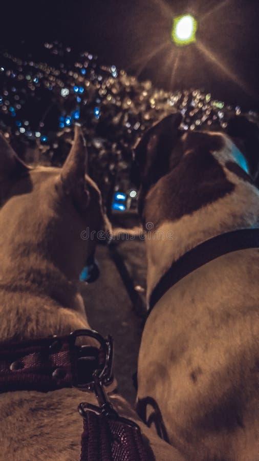 cães fotos de stock royalty free