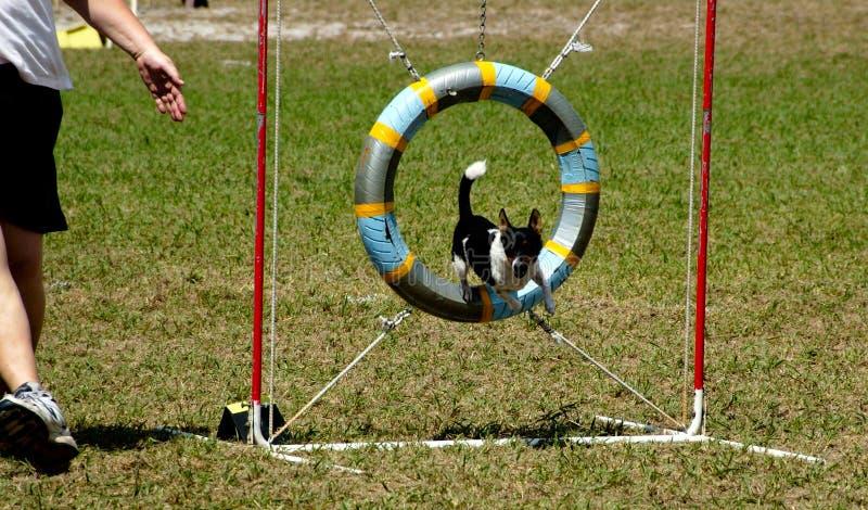 Cães 17 Imagem de Stock