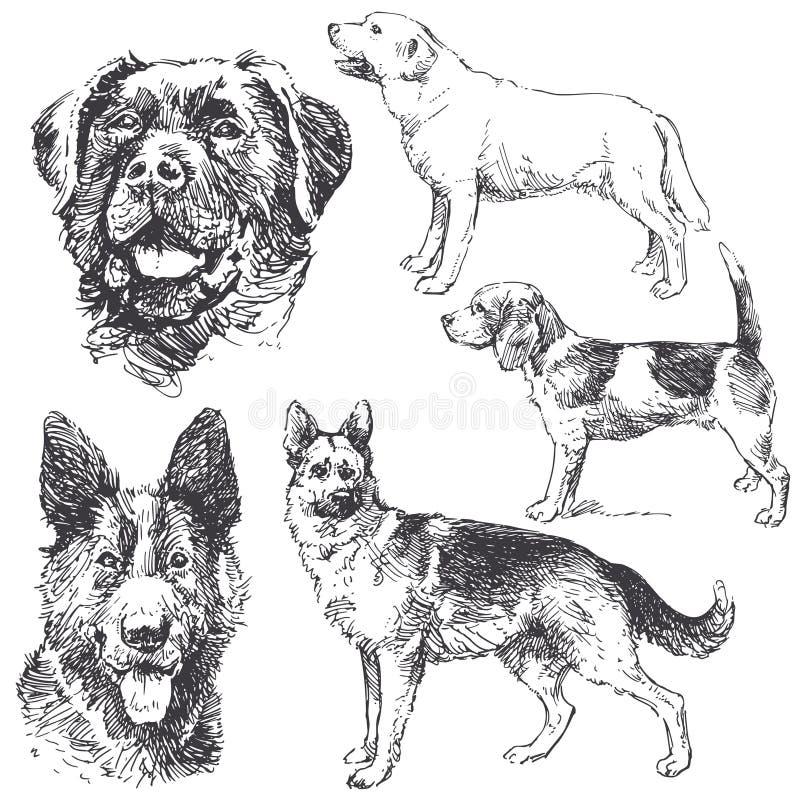 Cães ilustração do vetor