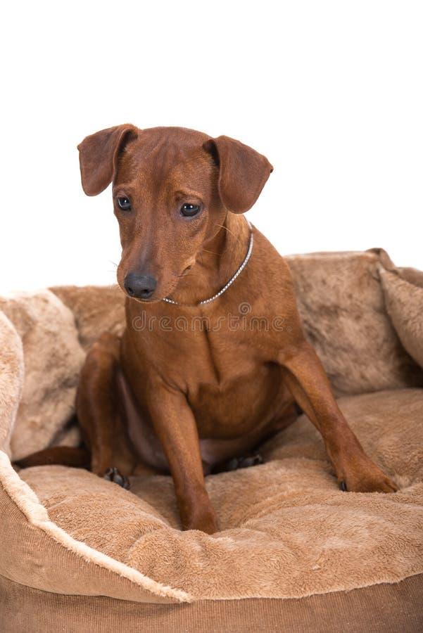 cães foto de stock
