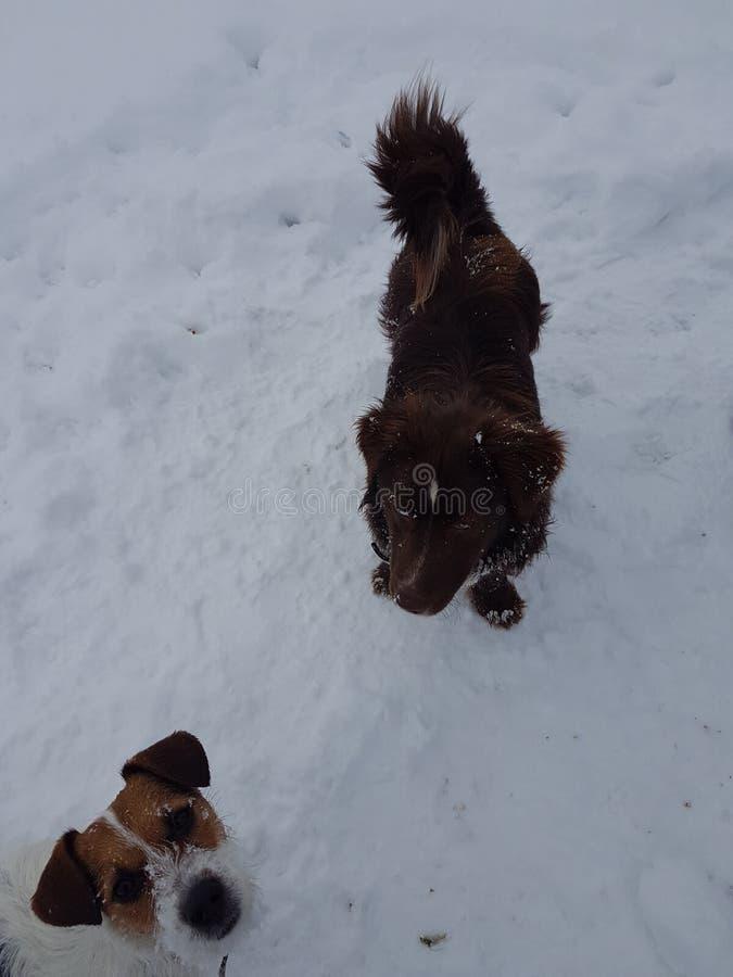 Cães adoráveis no inverno imagem de stock