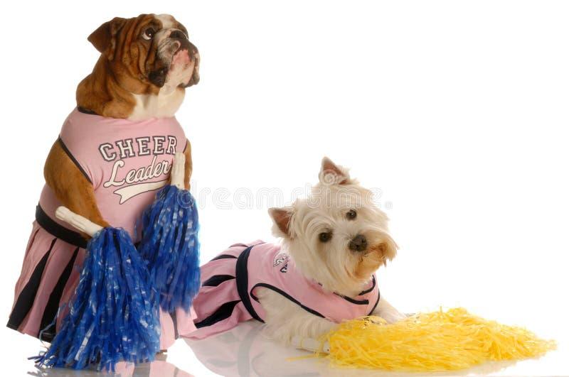 Cães alegres imagem de stock royalty free