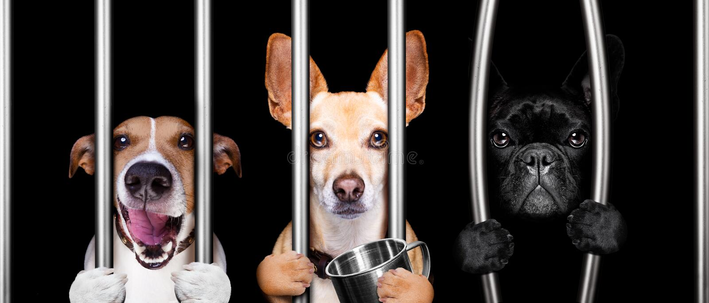 Cães atrás das barras na prisão da cadeia fotos de stock