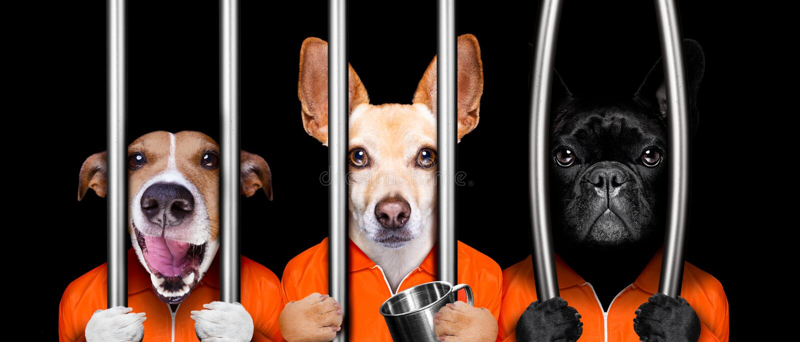 Cães atrás das barras na prisão da cadeia imagem de stock