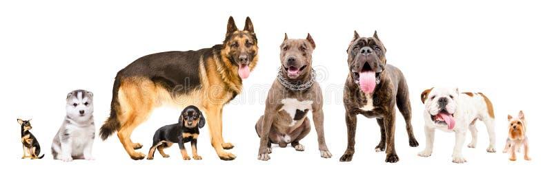 Cães bonitos do Grupo dos Oito imagens de stock royalty free
