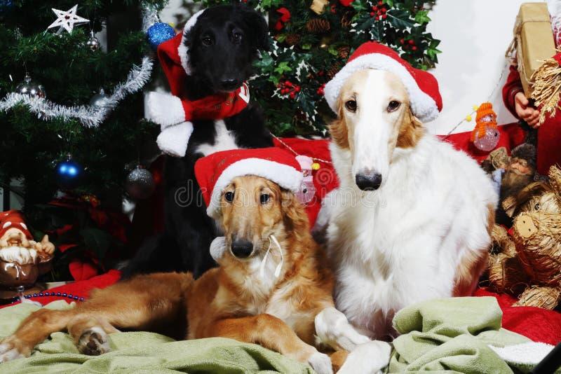 Cães com cumprimentos do Natal imagem de stock