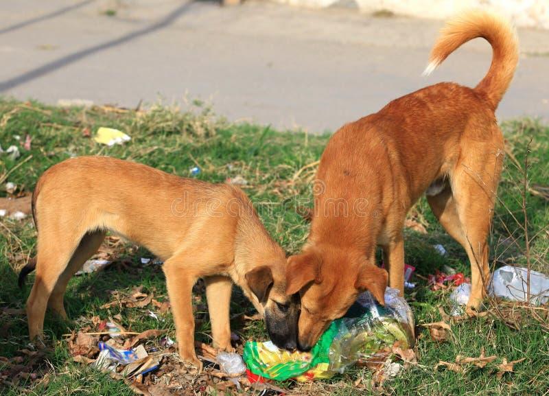 Cães com fome fotos de stock royalty free