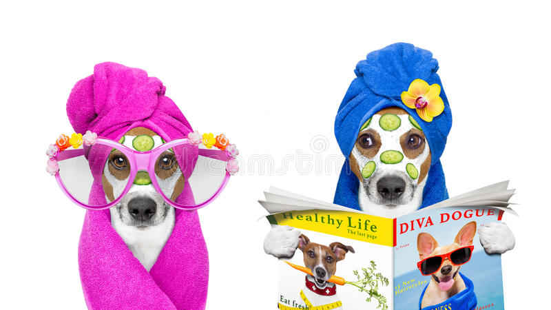 Cães com uns termas do bem-estar da máscara da beleza fotos de stock royalty free
