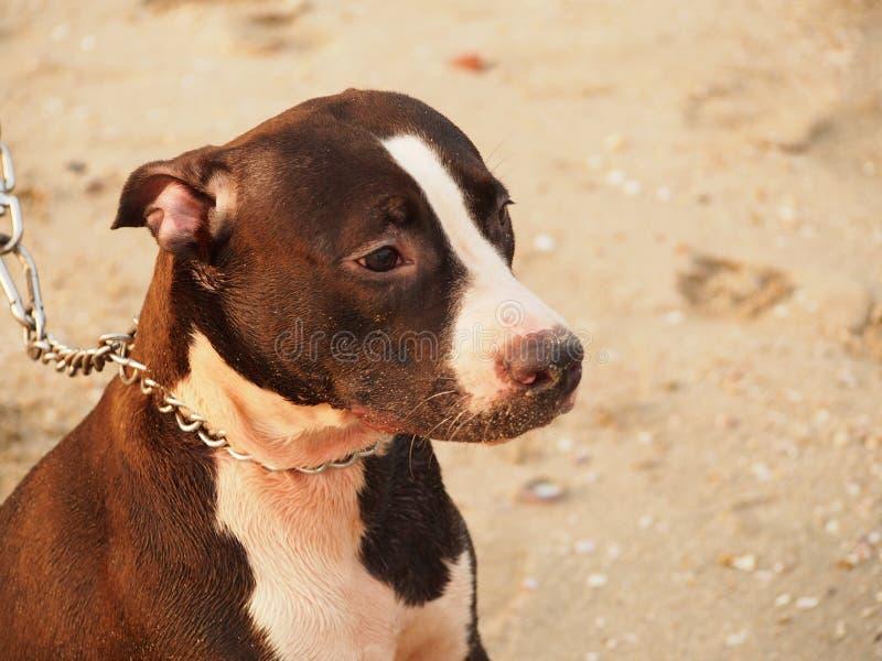 Cães da praia imagem de stock royalty free