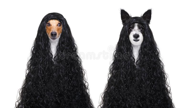 Cães da preparação nos cabeleireiro imagens de stock royalty free
