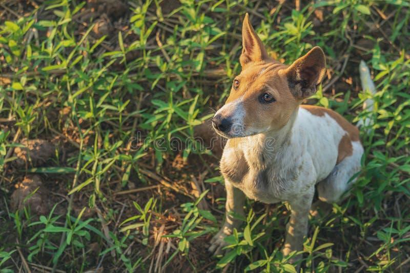 Cães da rua que esperam o desperdício de alimento na grama na noite fotografia de stock royalty free