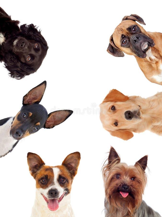 Cães de Differents que olham a câmera imagem de stock