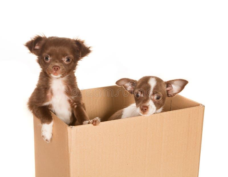 Cães de filhote de cachorro em uma caixa fotografia de stock royalty free
