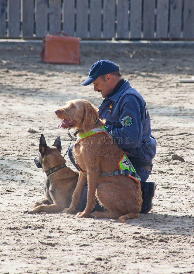 Cães de polícia no trabalho fotos de stock royalty free
