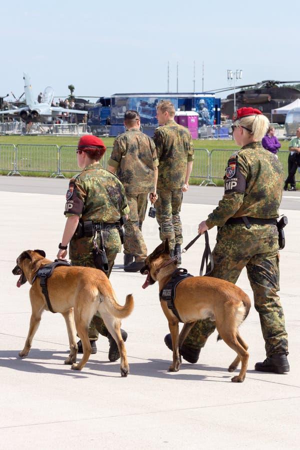 Cães de protetor militares fotografia de stock