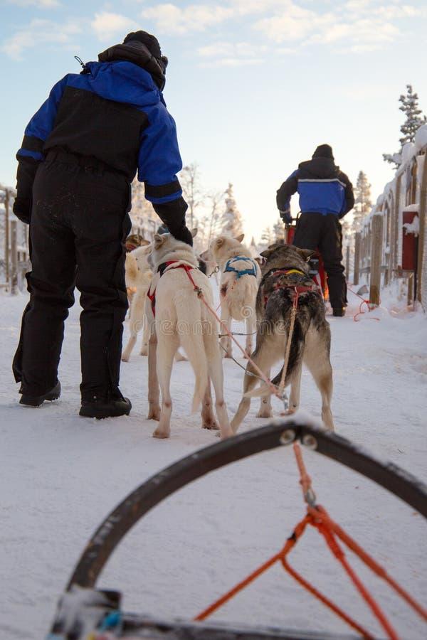 Cães de puxar trenós que puxam o trenó do cão foto de stock royalty free