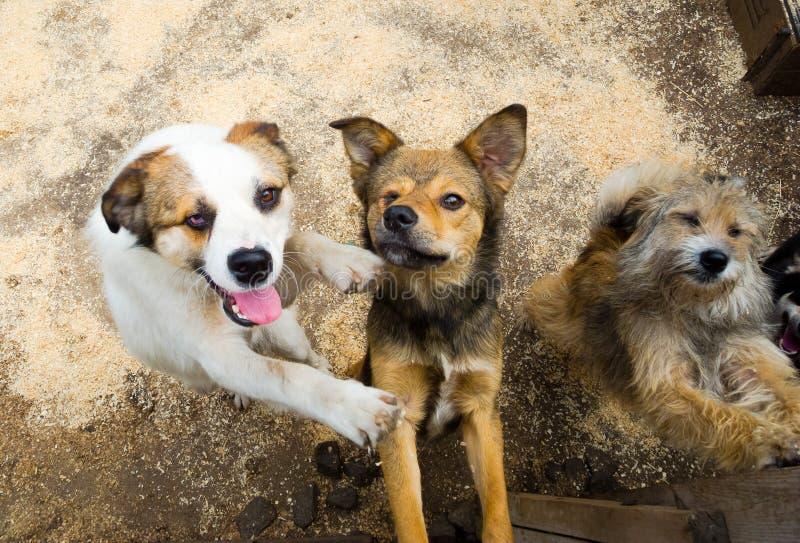 Cães dispersos imagem de stock royalty free