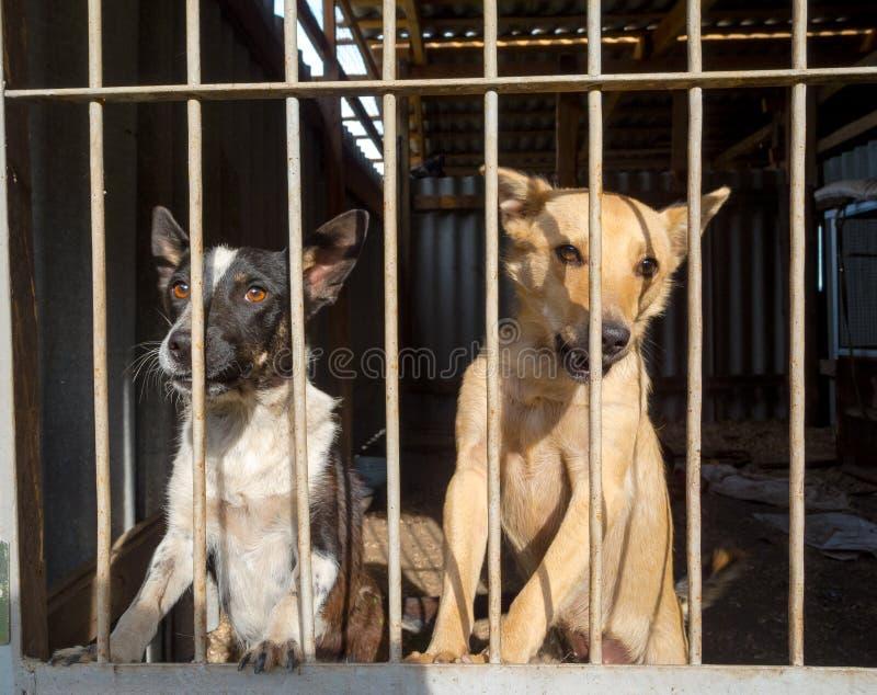 Cães dispersos fotos de stock