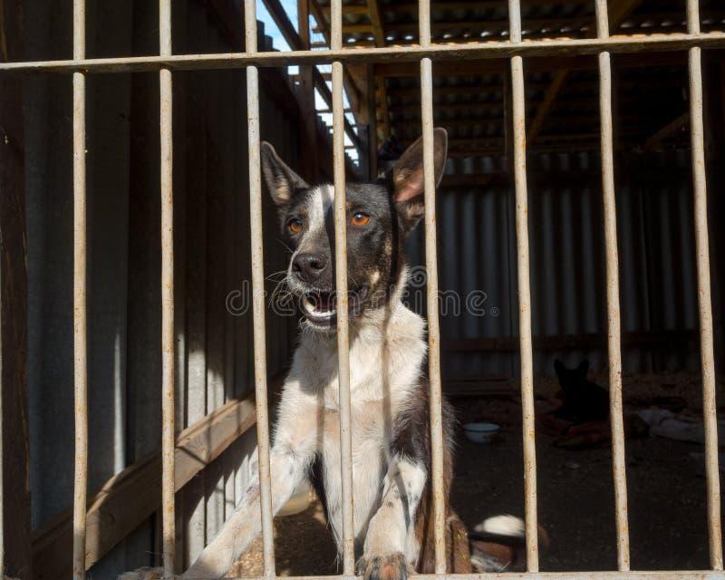 Cães dispersos imagens de stock