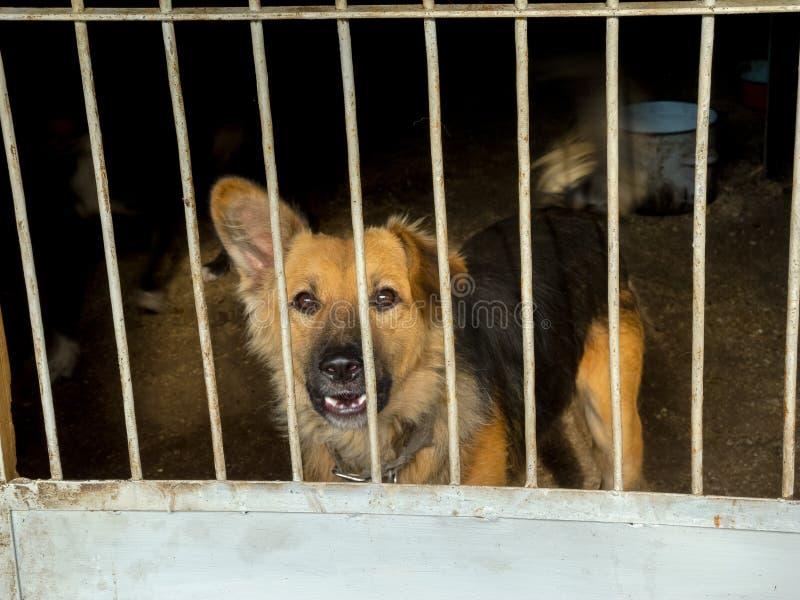 Cães dispersos foto de stock royalty free