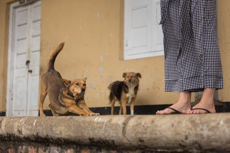 Cães dispersos preguiçosos felizes que penduram para fora no estação de caminhos-de-ferro imagem de stock