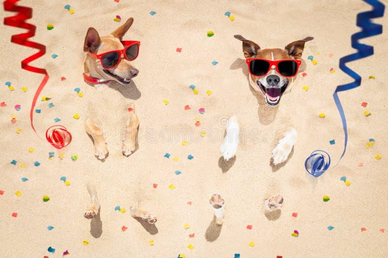 Cães do ano novo feliz na praia fotos de stock