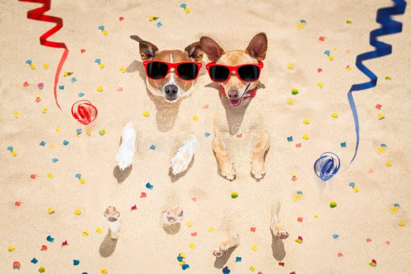 Cães do ano novo feliz na praia imagem de stock