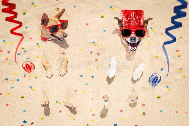Cães do ano novo feliz na praia fotos de stock royalty free