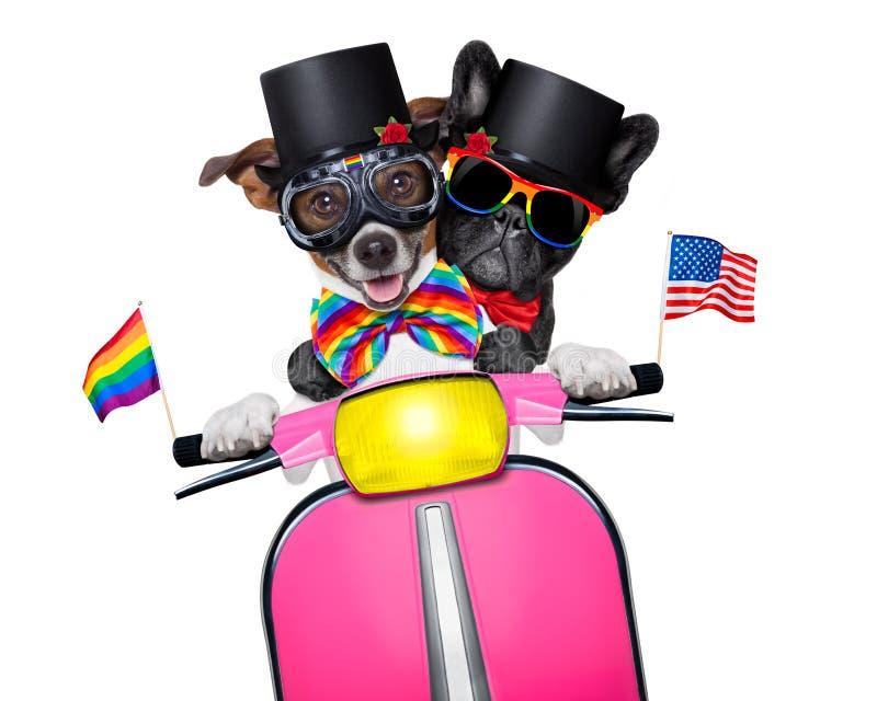 Cães do casamento entre homossexuais foto de stock
