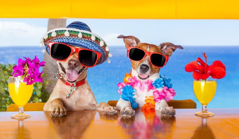 Cães do cocktail imagens de stock