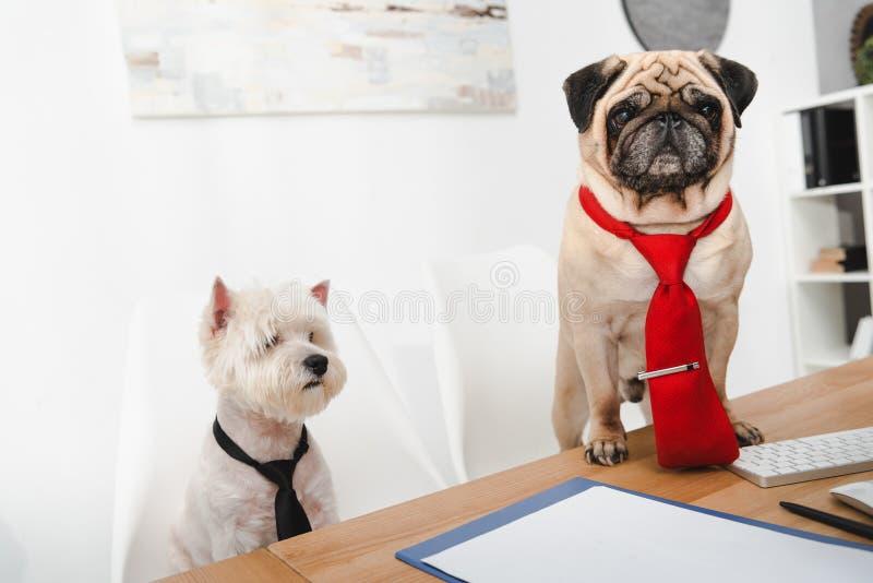 Cães do negócio fotografia de stock
