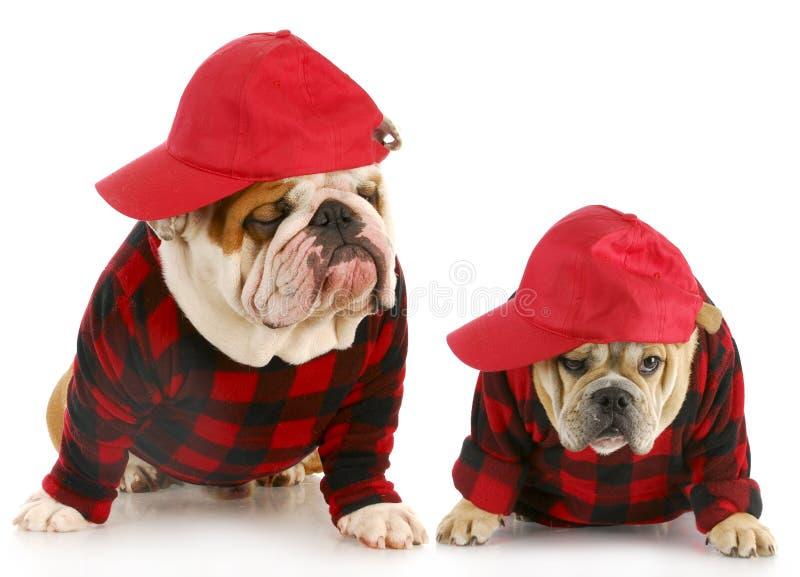 Cães do pai e do filho imagem de stock