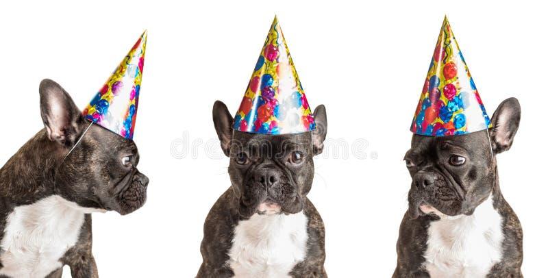 Cães do partido fotografia de stock