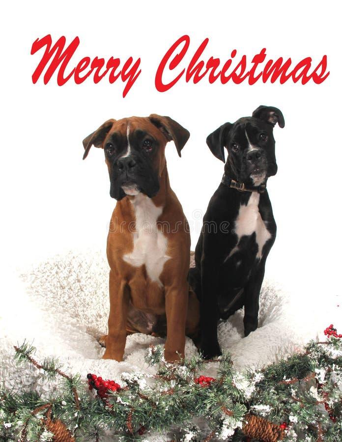 Cães do pugilista do Natal foto de stock