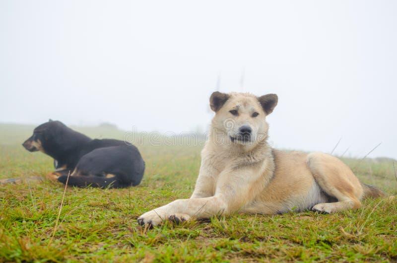 Cães domésticos foto de stock