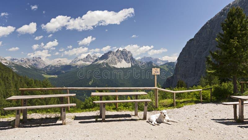 Cães dos alpes imagens de stock