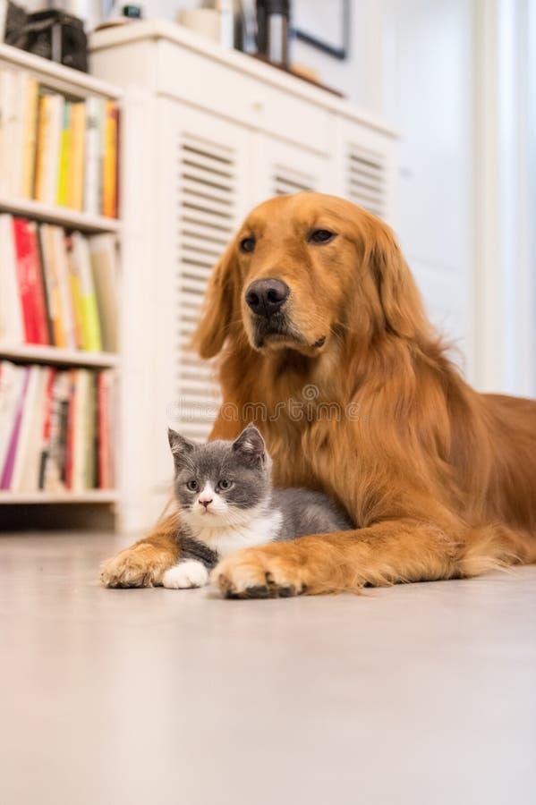 Cães e gatos foto de stock royalty free