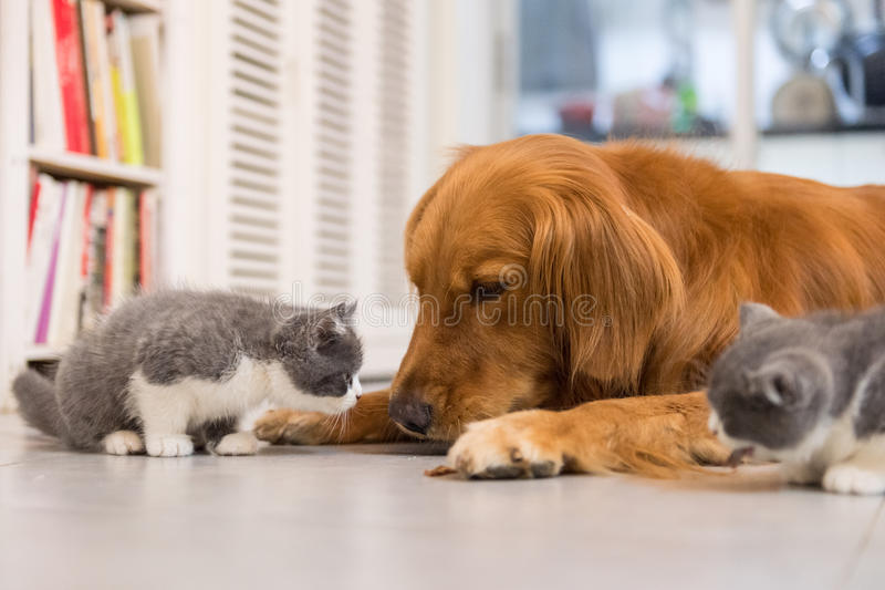 Cães e gatos fotografia de stock royalty free