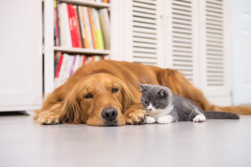 Cães e gatos fotografia de stock