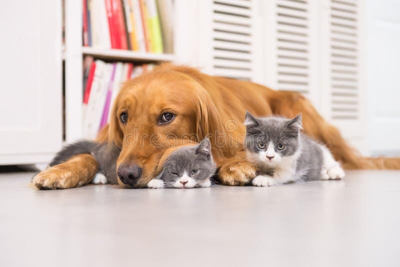 Cães e gatos foto de stock