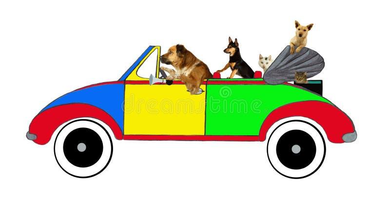 Cães e gatos que conduzem em um carro foto de stock royalty free