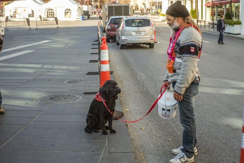 Cães e voluntários de Mira imagens de stock royalty free