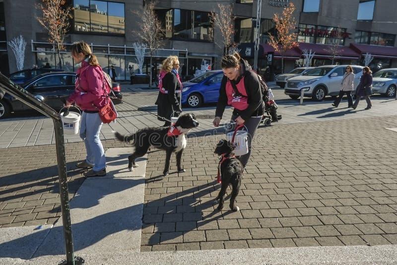 Cães e voluntários de Mira imagem de stock royalty free
