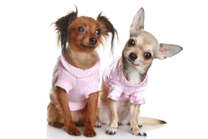 Cães em um fundo branco fotos de stock