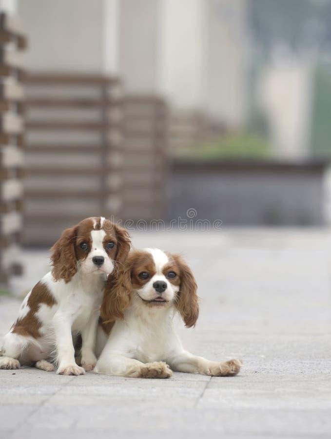 cães encantadores imagens de stock